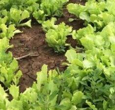 肥料養分檢測儀促進農業可持續發展!