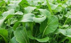 肥料養分速測儀助力農業科學研究