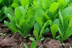 土壤肥料養分速測儀緩解土壤肥力下降問題