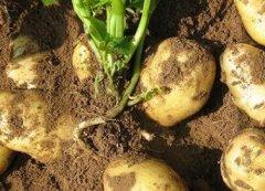 利用測土配方施肥儀增加土壤的肥力